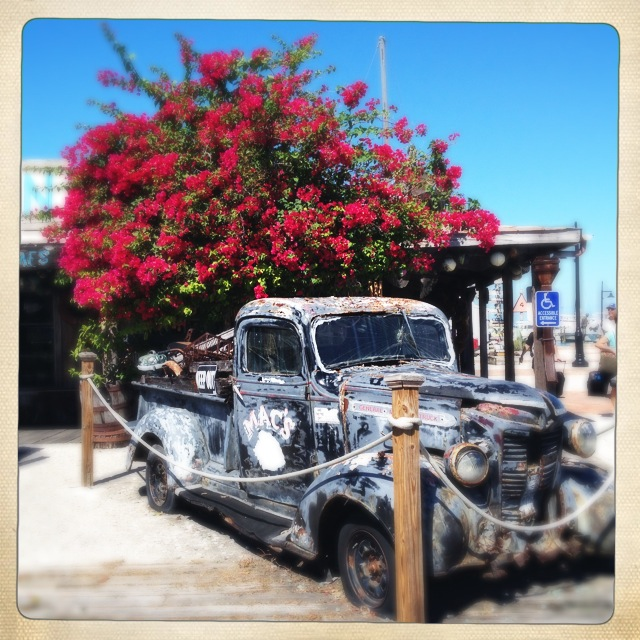 The blue of the sky really makes the pink flowers pop and stand out from the old rusting car.