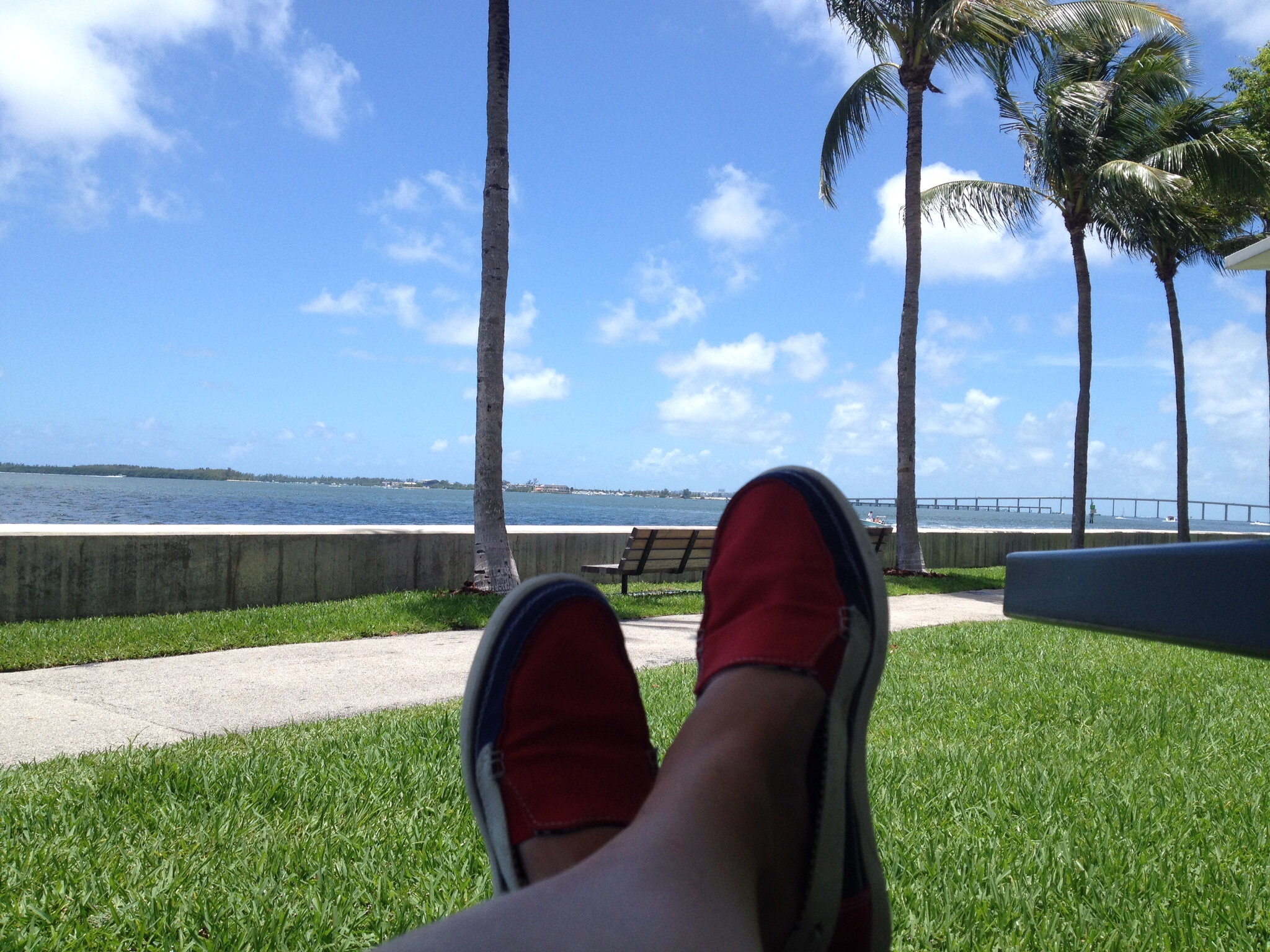 Relaxing by the bay, under the palm trees after a cycle.