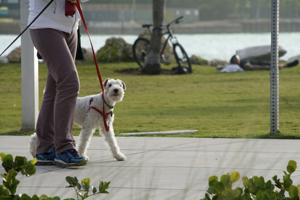 A Dog and his owner taking a stroll